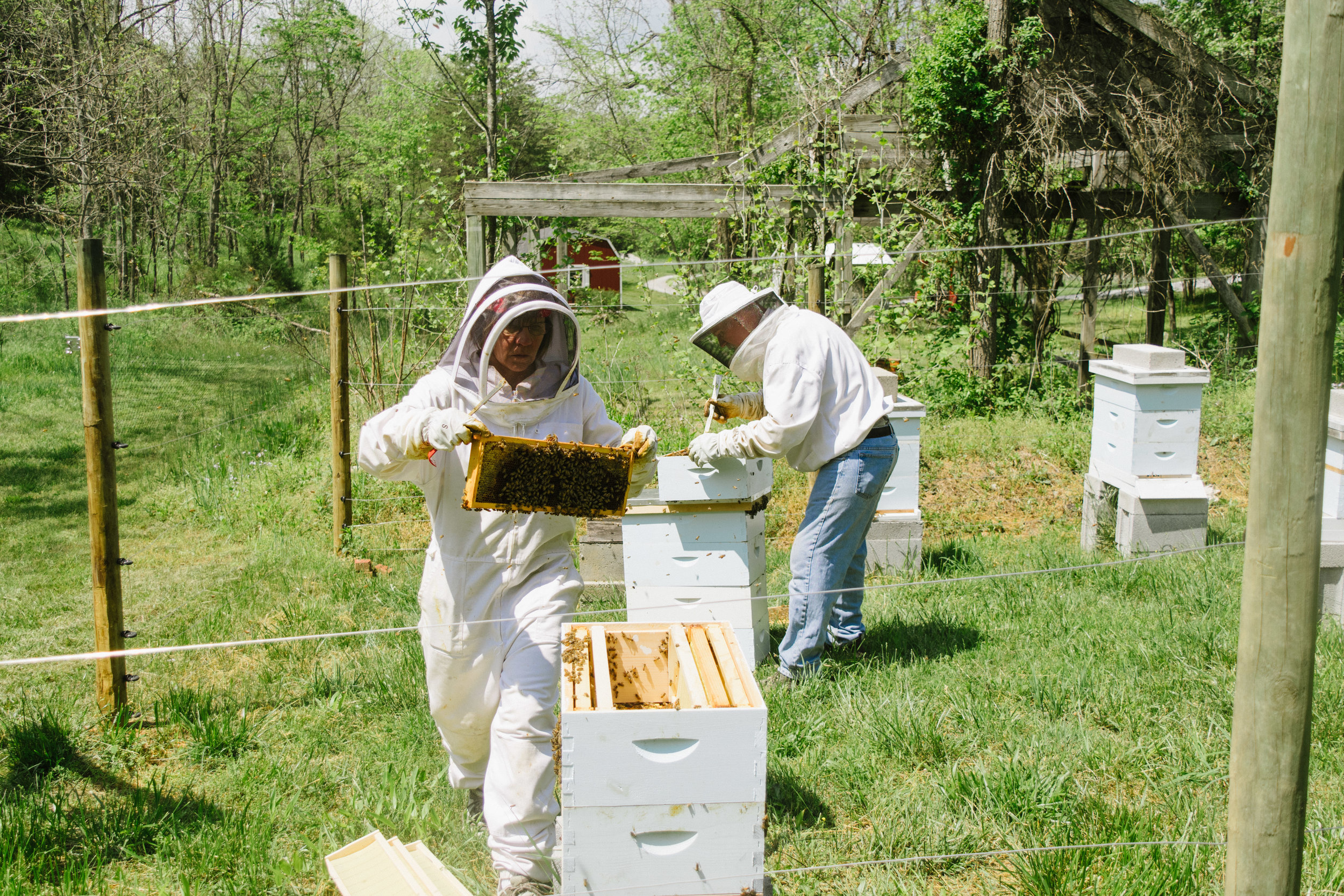 Moving select frames to the new hive
