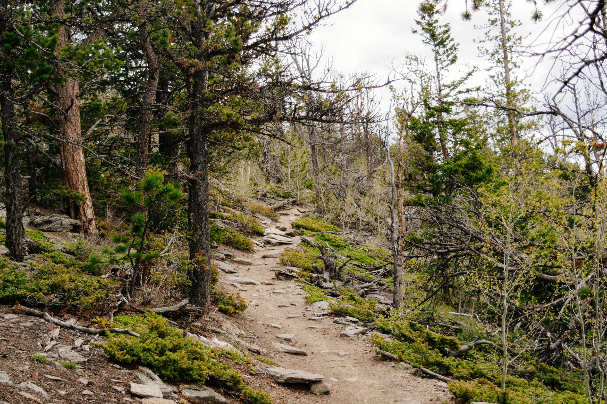 deer mountain-30.jpg