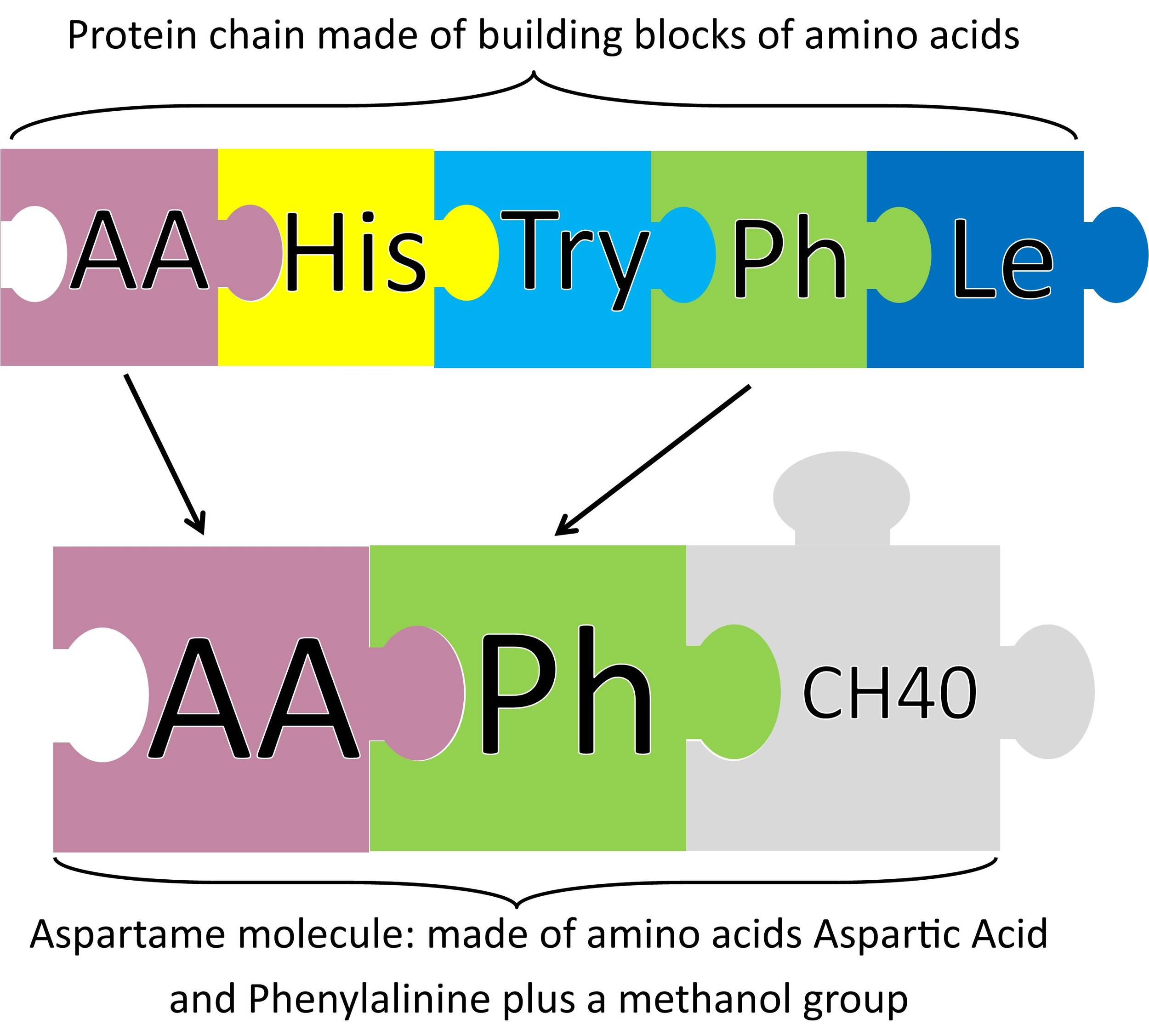 Aspartame Molecule from Peas and Hoppiness - www.peasandhoppiness.com