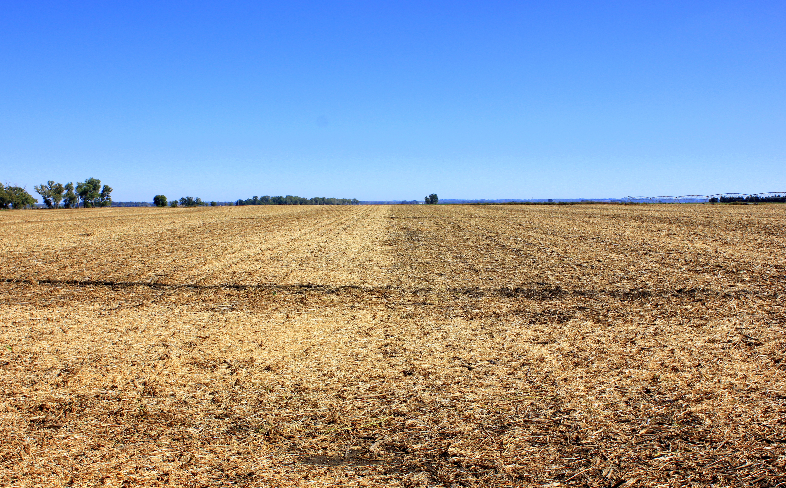 Soybean stubble (and a bit of leftover milo residue)