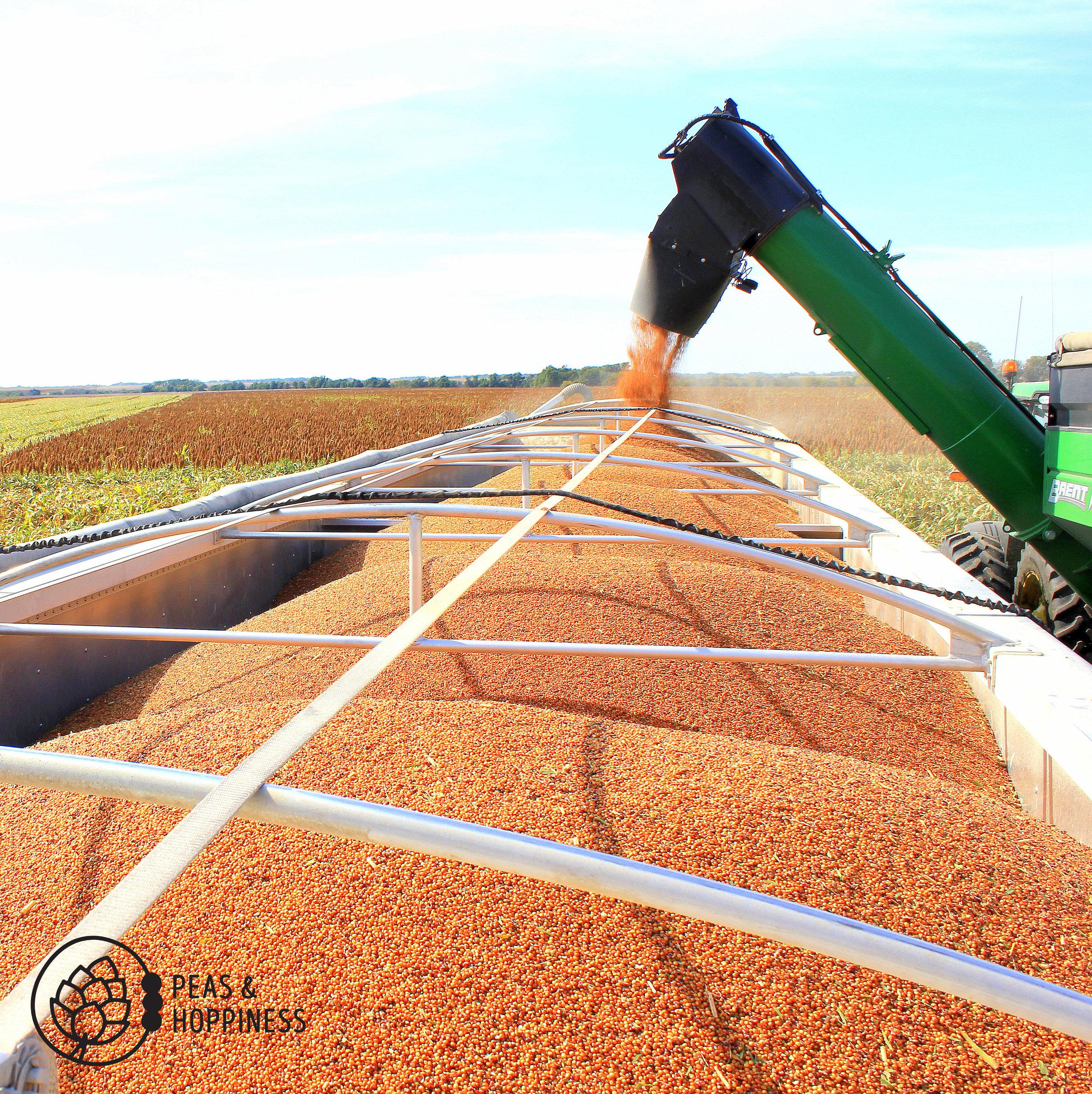 Milo Harvest 2015