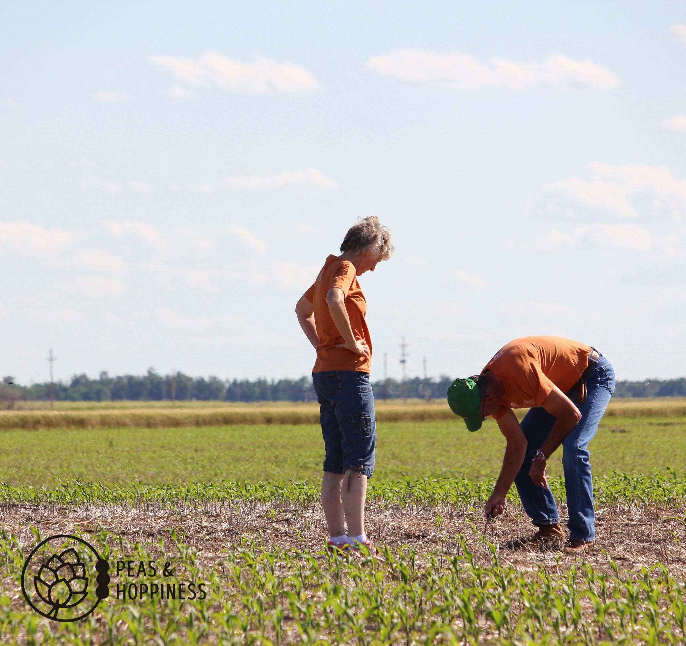 If they're near a field, they're farming. Checking to see if all seeds have germinated.