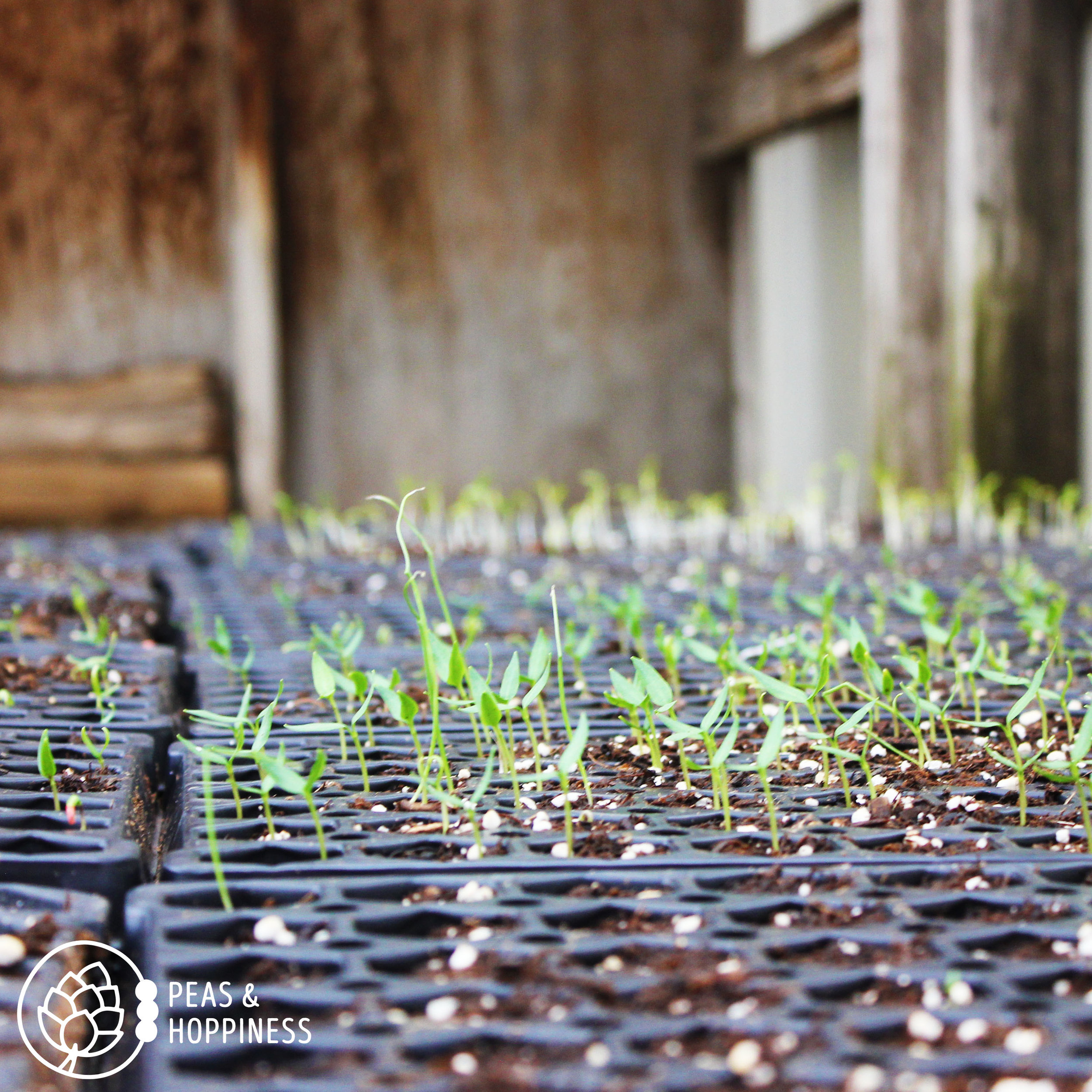Grow, baby, grow! Greenhouse babies getting ready for planting