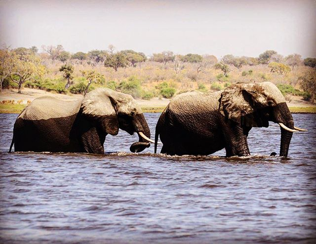 """A shot taken from the Okavango Delta last year. We are devastated to hear the news of mass poaching in this area. """"This planets treatment of animals will one day be considered barbarous. There cannot be a perfect civilisation until man realises that the rights of every living creature are as sacred as his own."""" 📸: @textilelofts"""