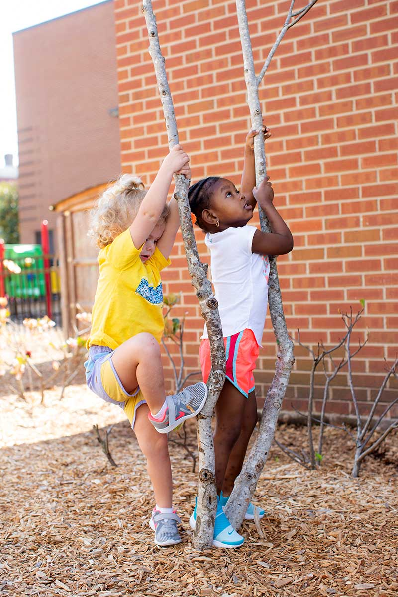 school-kids-treeclimb2-800v.jpg