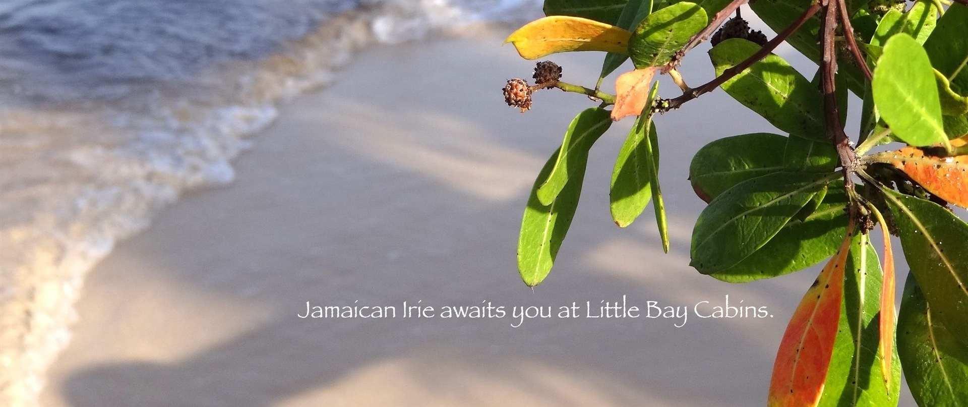 little bay irie.JPG