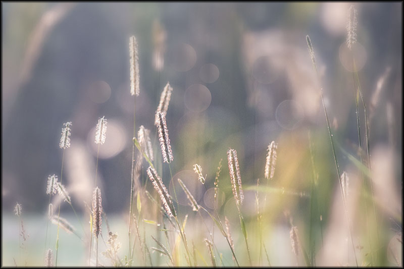 02536pxp.Patch_of_Sunlight.jpg