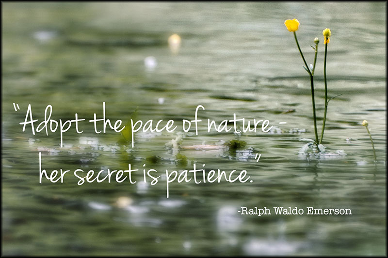 02224pxp.Quotes04.Patience.jpg