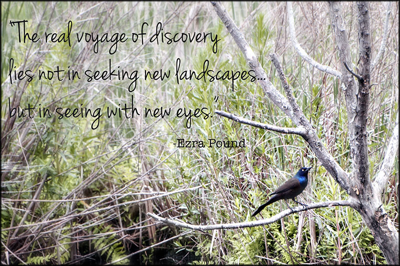 02222pxp.Quotes03.Seeing with new eyes.jpg