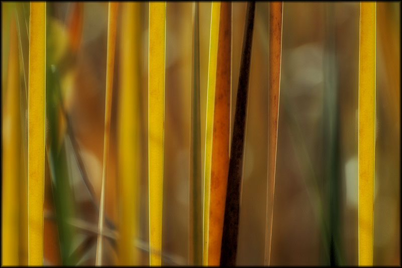 02316pxp.Autumn_Abstracted.jpg
