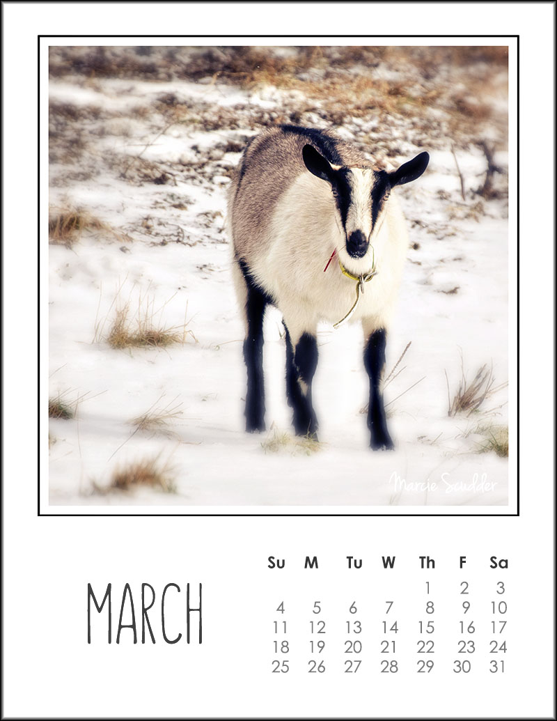 03174pxp.March_Calendar_2018.jpg