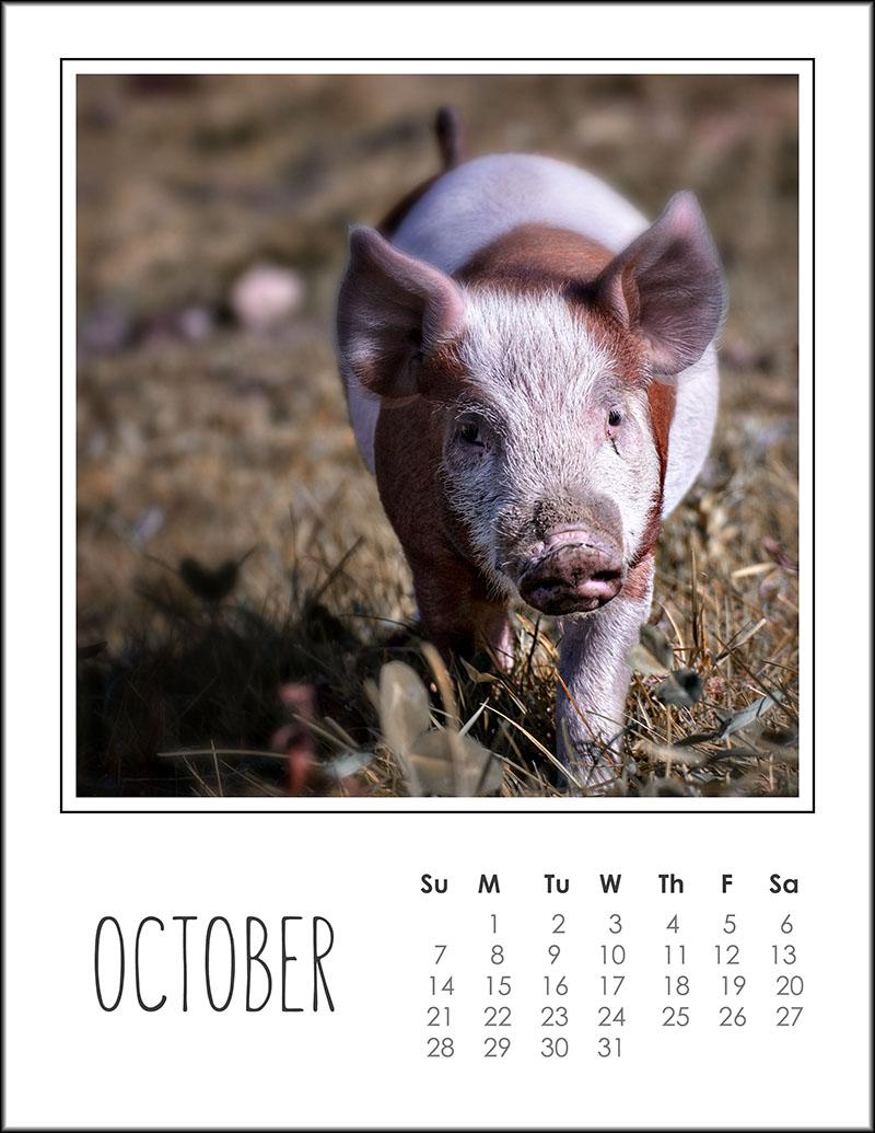 03354pxp.October_Calendar_2018.jpg