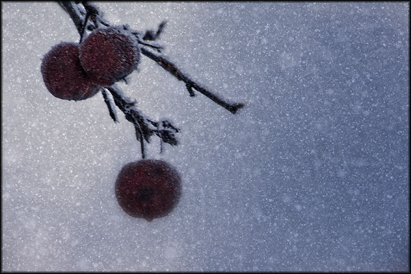 03304pxp.Frozen.jpg