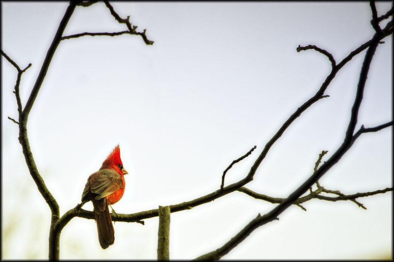 03323pxp.Bird_Song.jpg