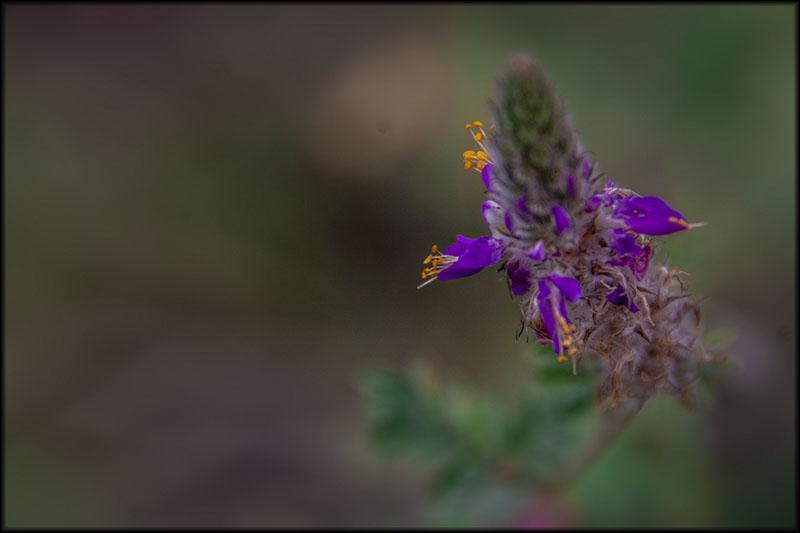 03341pxp.Desert_Blooms.jpg