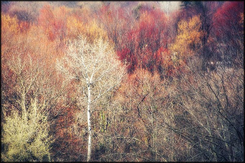 03346pxp.Color_of_Mud.jpg