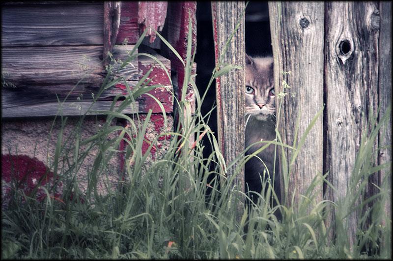 03374pxp.Meow_Meow.jpg