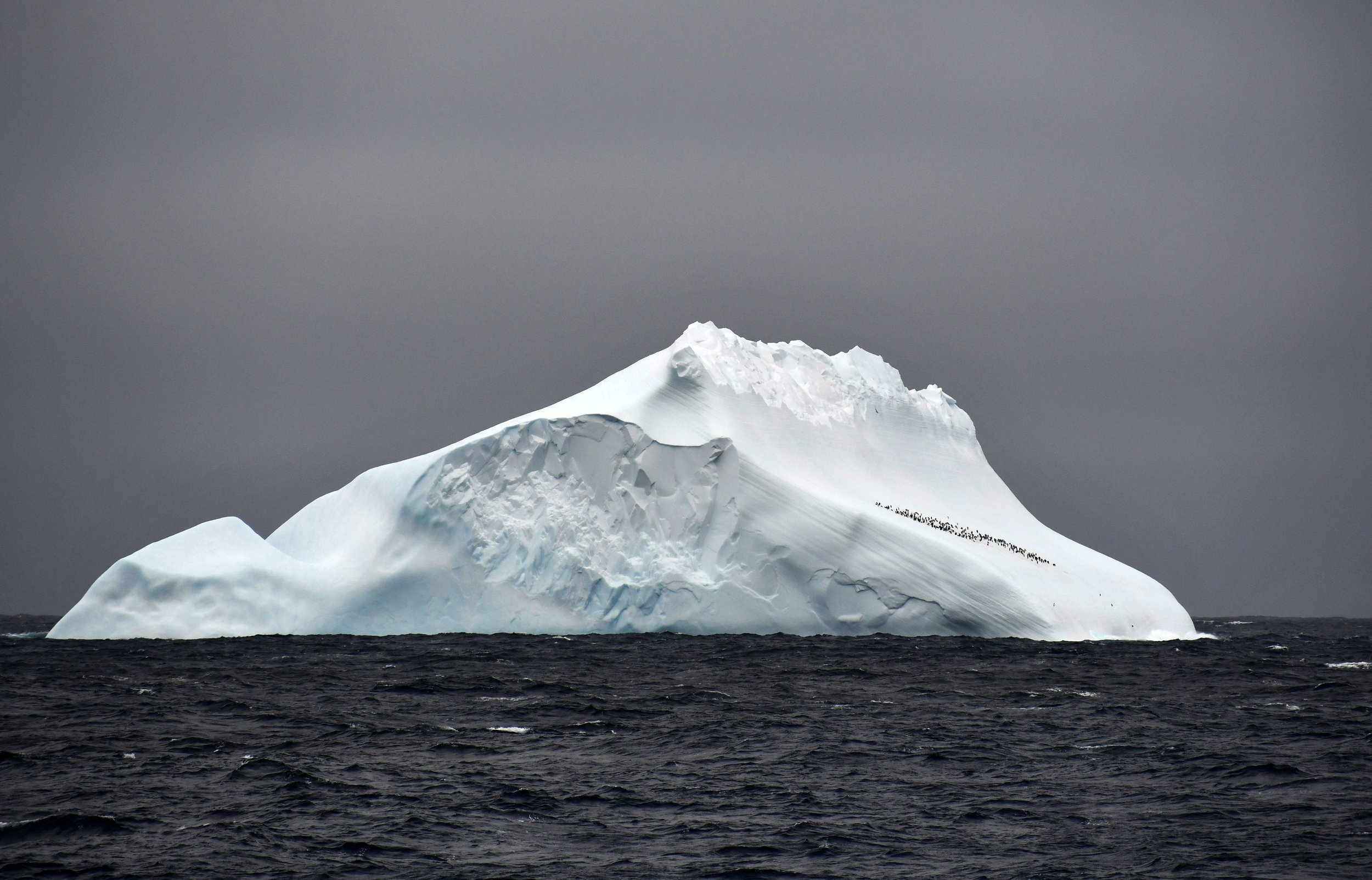Iceberg with penguins, Copyright © Marlo Garnsworthy 2019