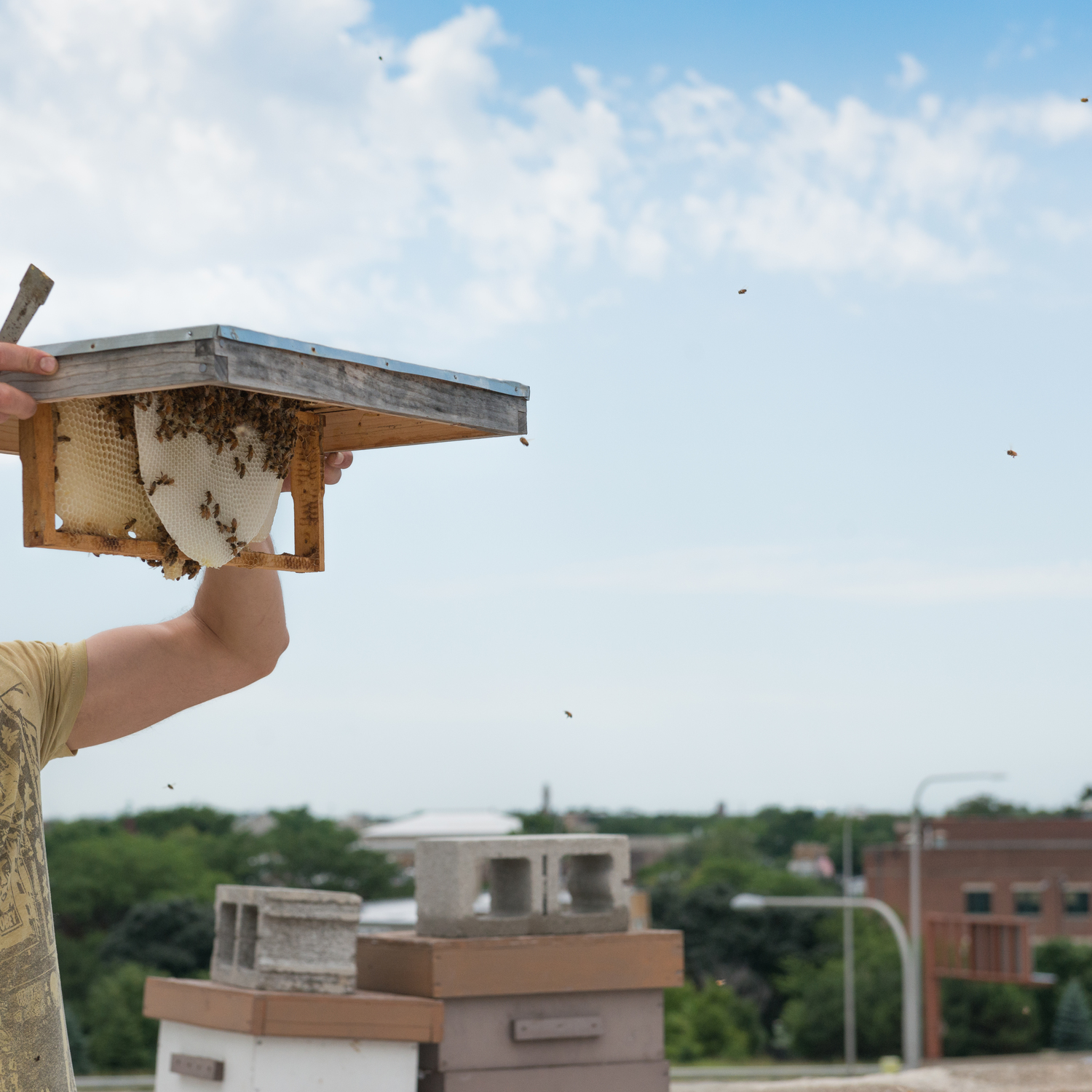 The rooftop apiary is one of Green Exchange's many unique features, the honey collected from these urban beehives is used in the on-site Arbor Cafe; image by  Arbor Projects