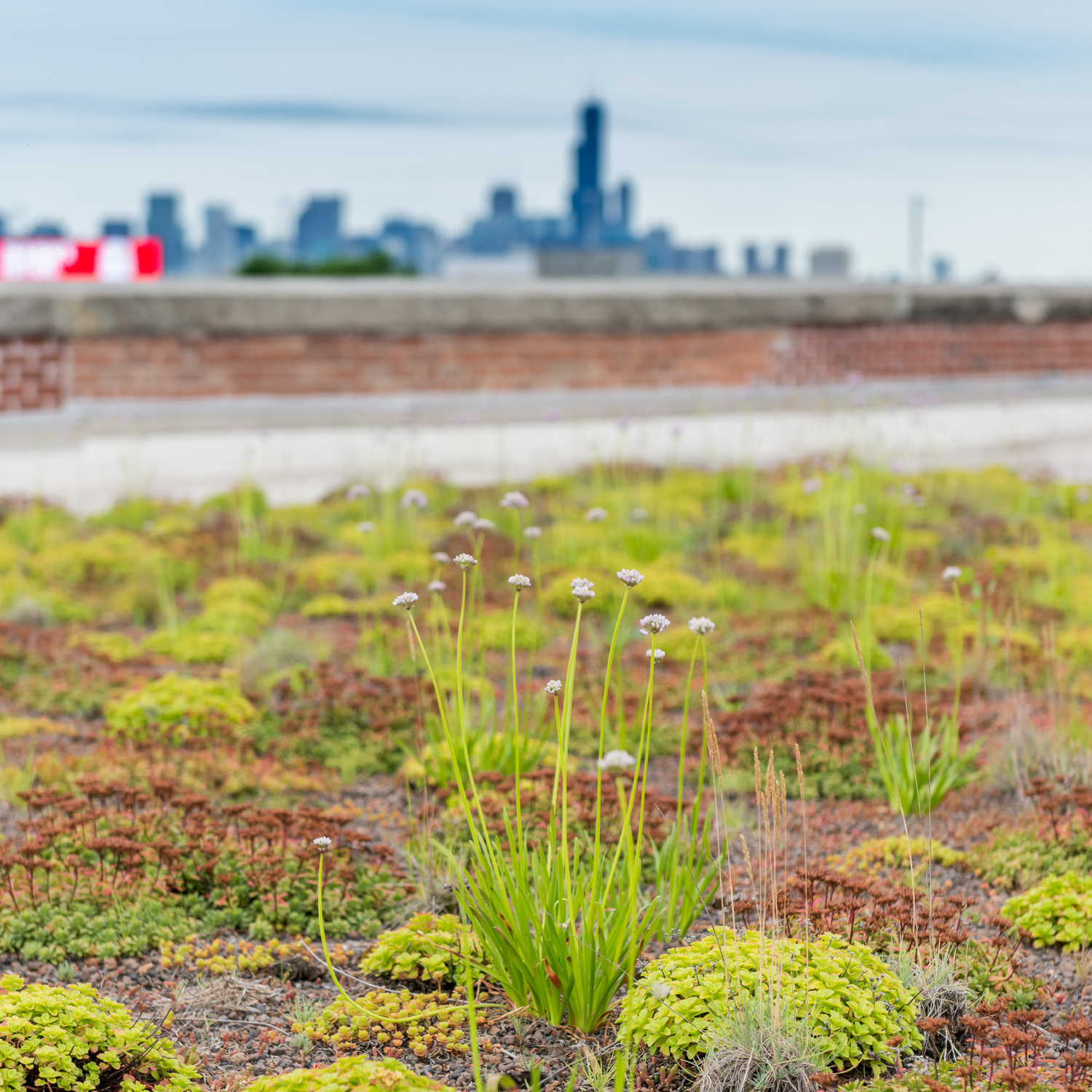 Herbs grown on the green roof are then used by the on-site restaurant to feed tenants and visitors alike; image by  Arbor Projects