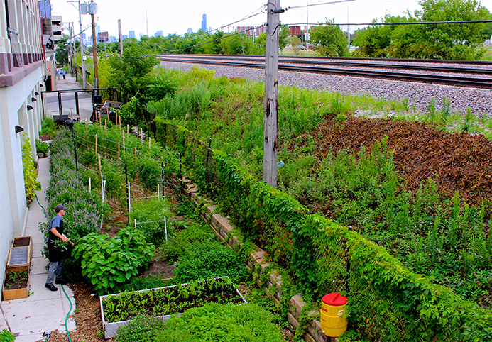 The Urban Garden at Green Exchange provides food for the on-site restaurant; image by  Arbor Projects