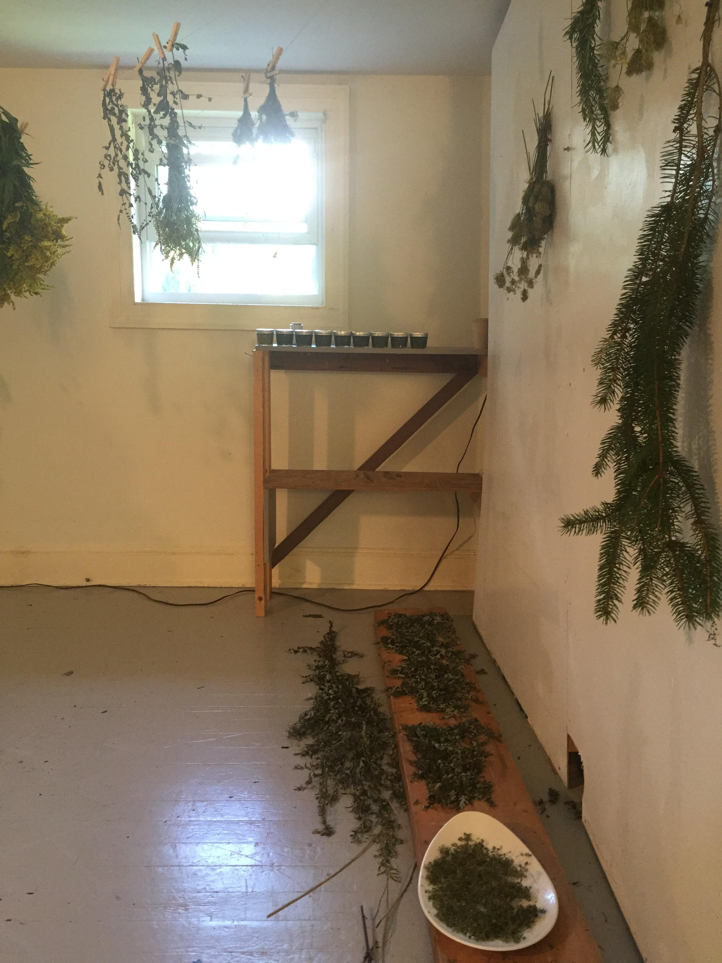 My studio at chaNorth where I collected, dried and then processed herbs into infused oils.