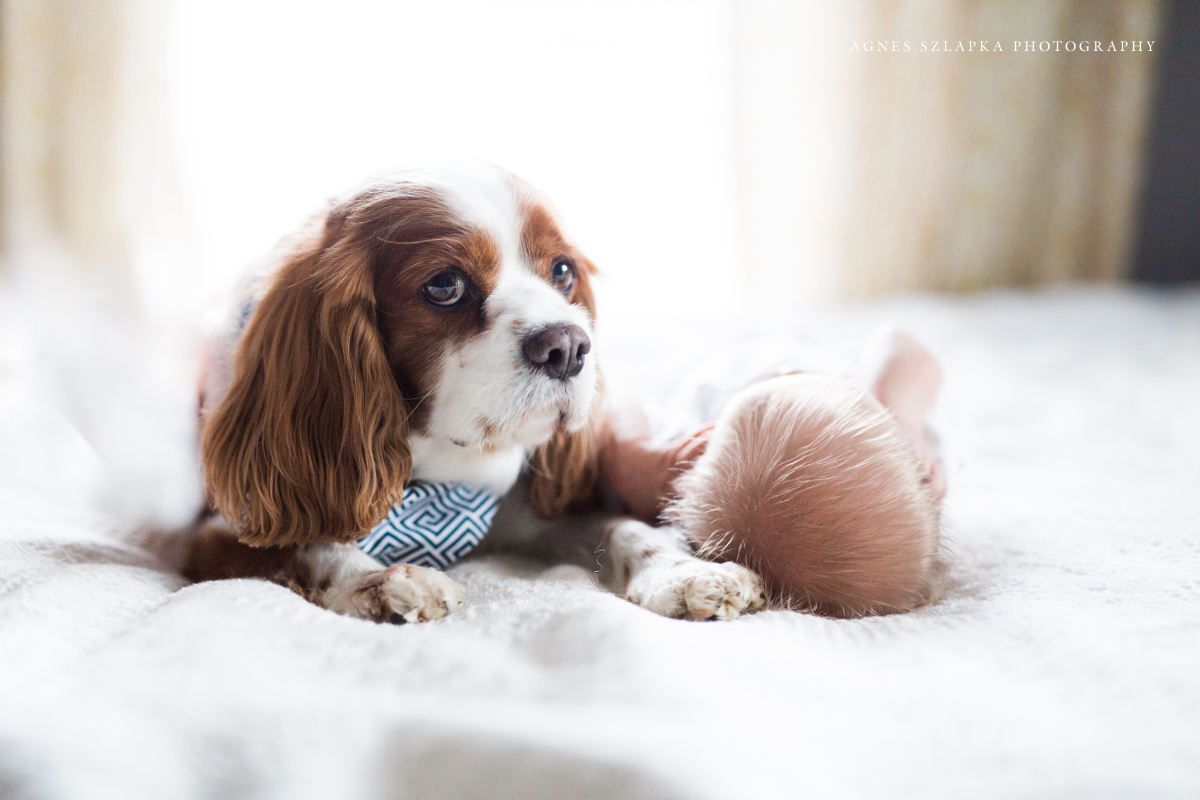 dog laying next to infant baby boy | cleveland, ohio lifestyle newborn photographer