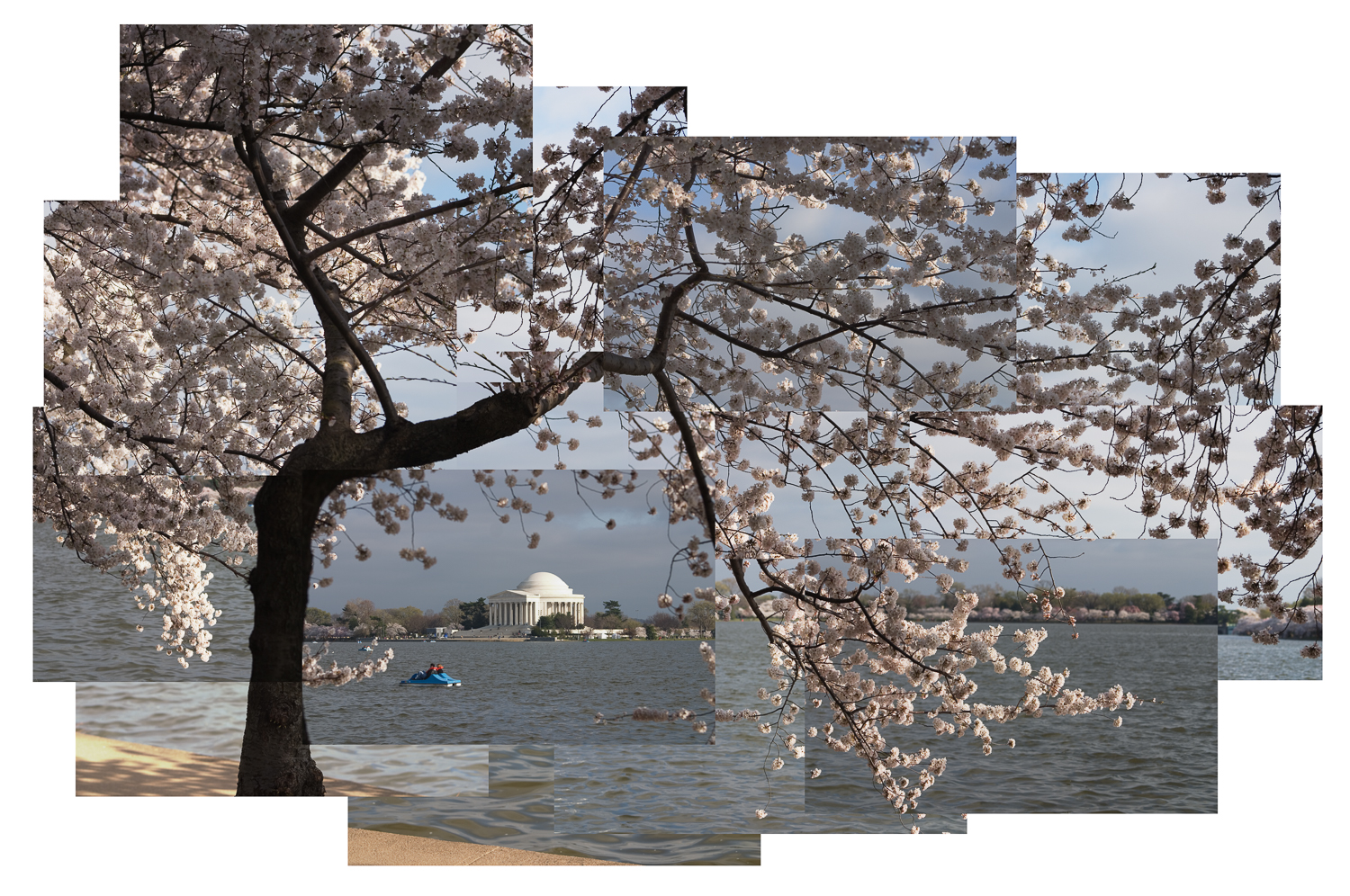 Jason Horowitz  Cherry Blossoms, Tidal Basin, Washington, DC  2004