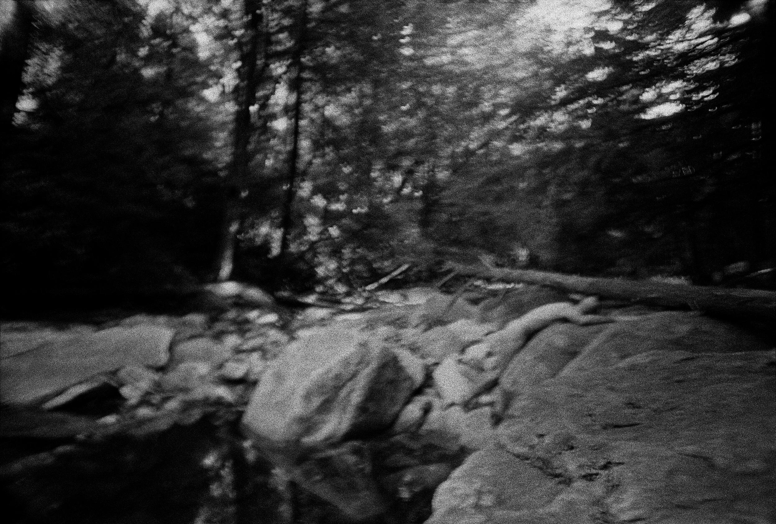 Woods-8.jpg