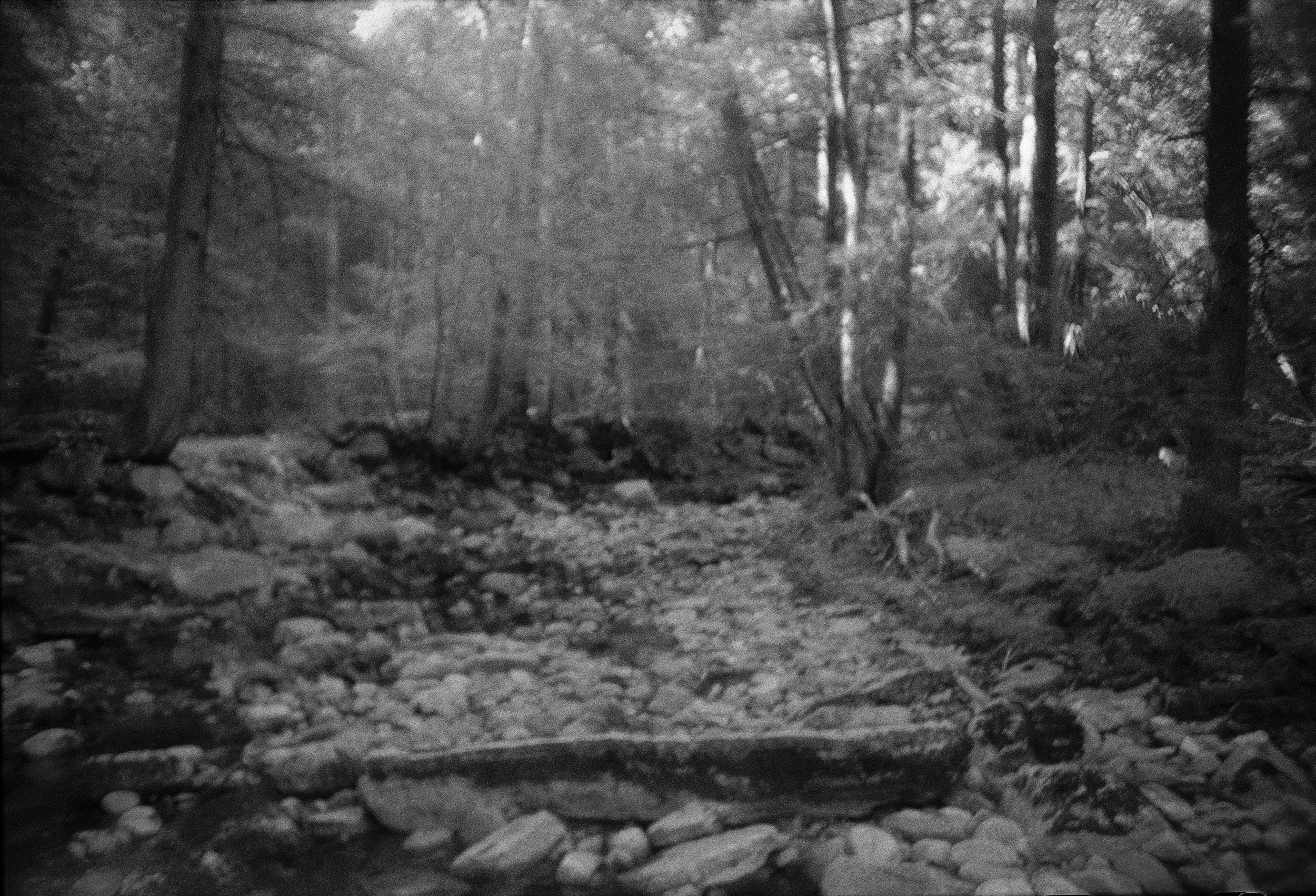 Woods-11.jpg