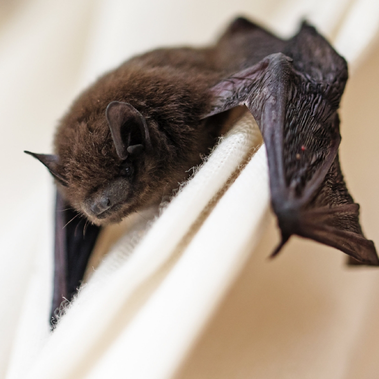 Project LittleBrown Bat - Learn about my passion project. I'm saving bats in my own backyard and you can too!
