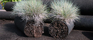 Cut-away view showing soil inside tube.