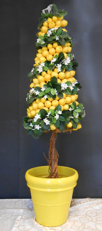 Lemon conical topiary
