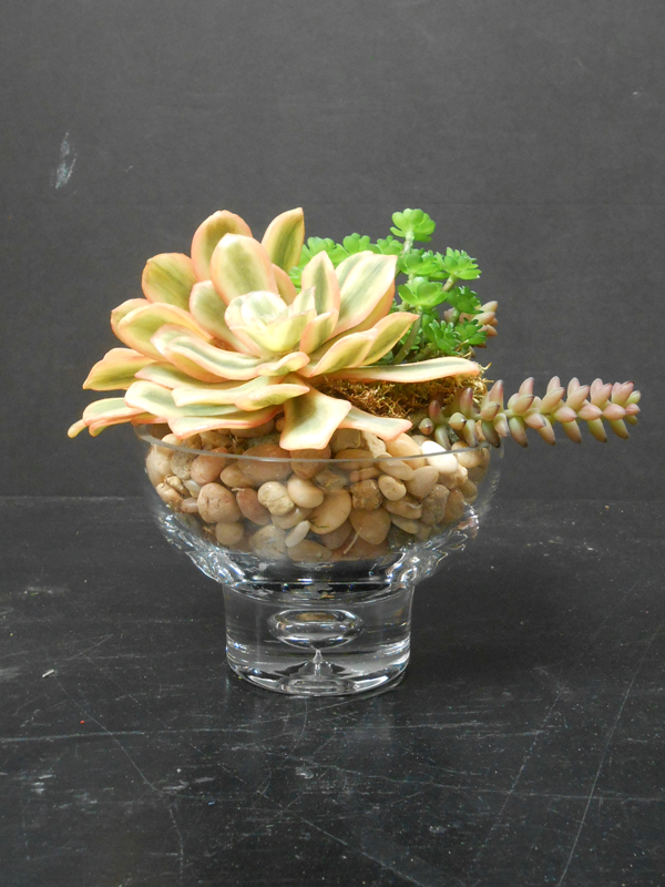 Small succulent planter in crystal
