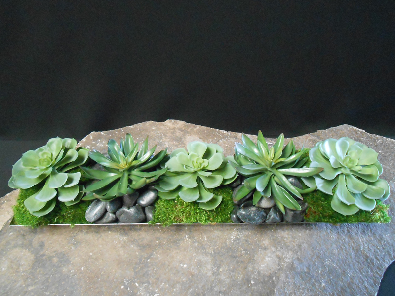 Succulent and Moss Tray