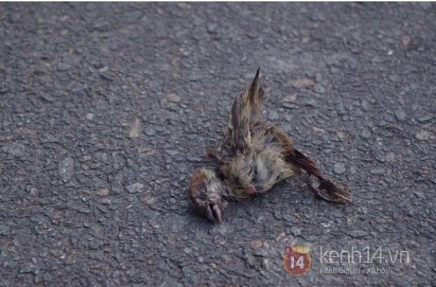 Một con chim phóng sinh chết ngay trên sân chùa