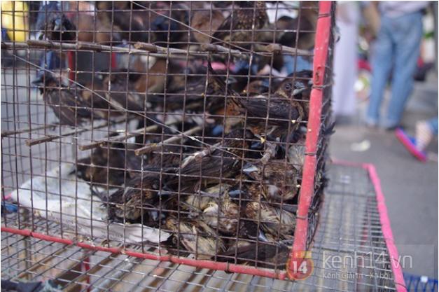 Cận cảnh những chú chim tội nghiệp bị nhốt trong lồng sắt.