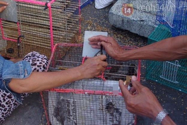 Mỗi khi có người mua, chim phóng sinh bị người bán bóp chặt khi bắt ra khỏi lồng.
