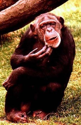 khỉ -3b.PNG