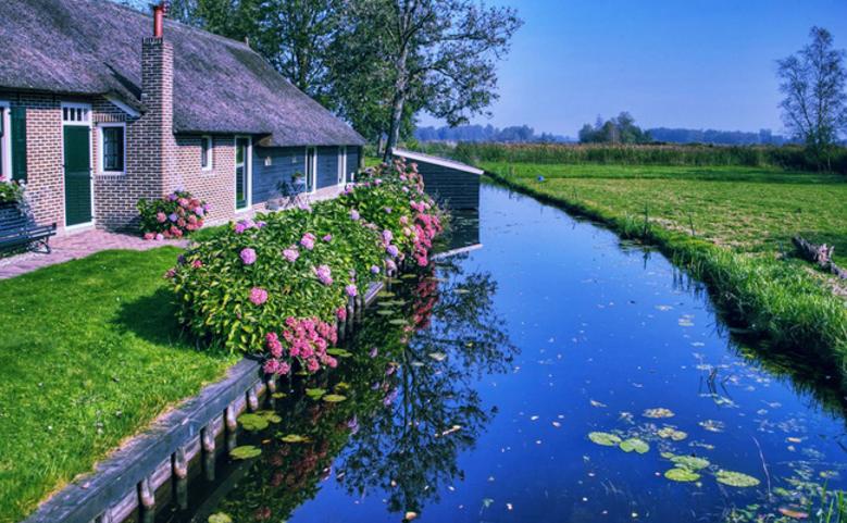 """Những bụi hoa làm nên """"thương hiệu"""" của Hà Lan."""