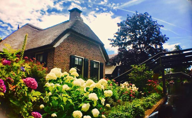 Những bụi hoa nở rực rỡ làm điểm nhấn cho những căn nhà của người Hà Lan.