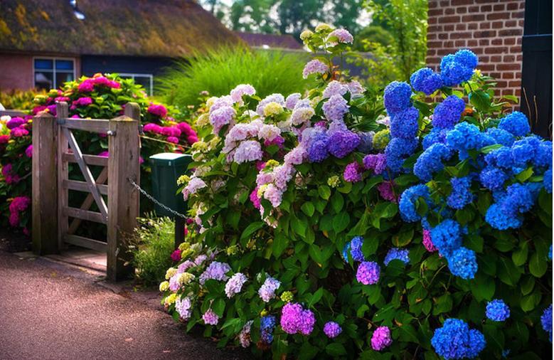 Hàng rào hoa, cổng gỗ đẹp như chốn thiên đường