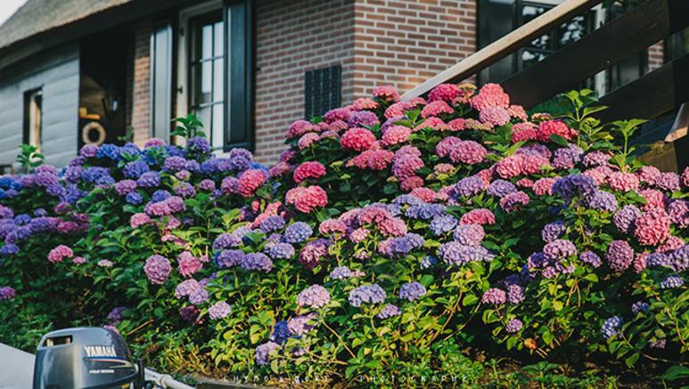 Hoa có mặt ở khắp nơi trong khu vườn của người dân