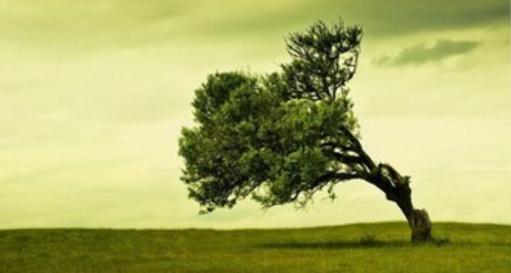Vì sao cây xanh không ngã trước gió? Nguồn internet.