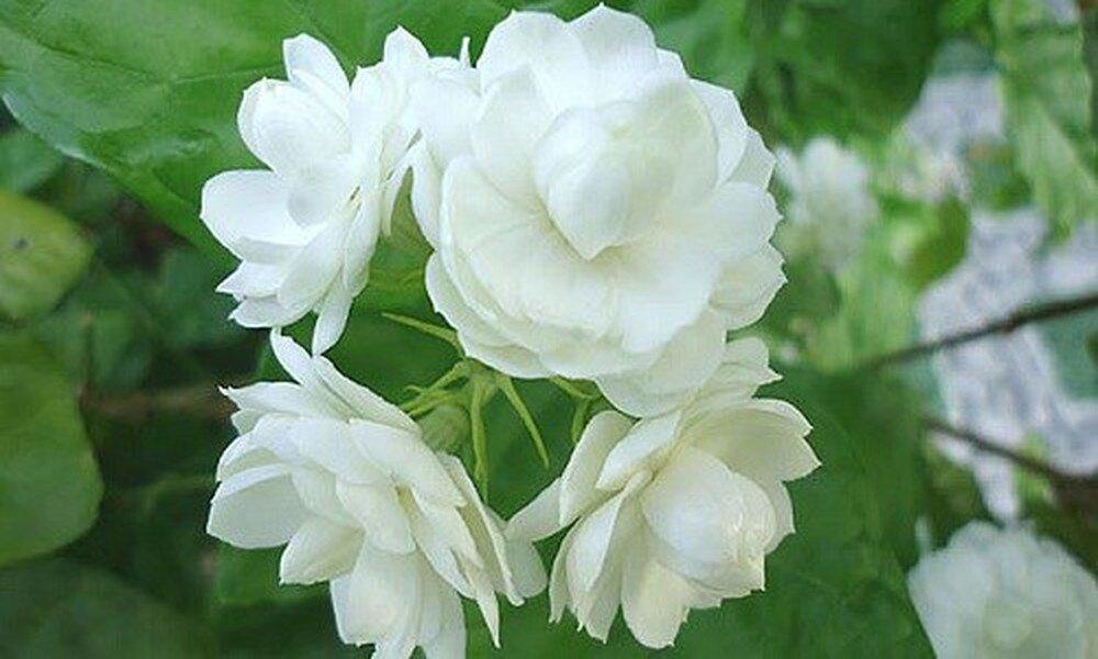 hoa thơm.jpg