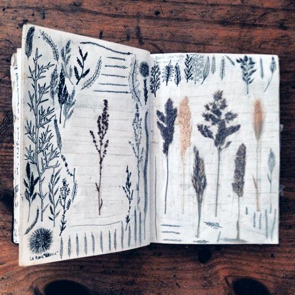 adelaide aronio botanic.png