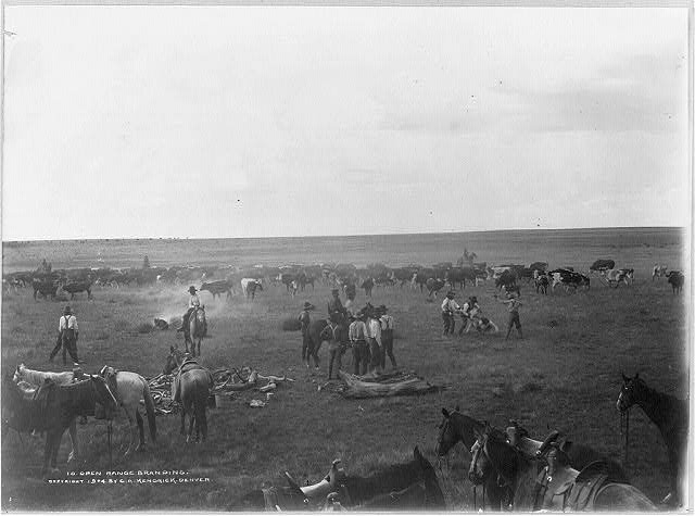 Cowboys Branding Cattle on the Open Range in the Texas Panhandle | Circa 1904
