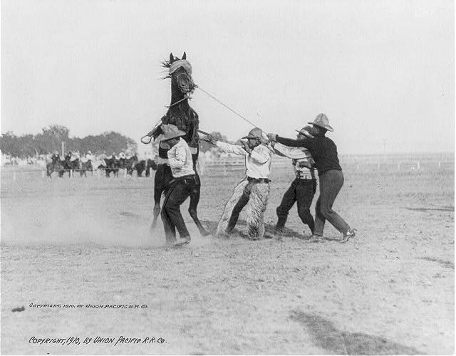 Four Cowboys Taming a Bucking Bronco | Circa 1910