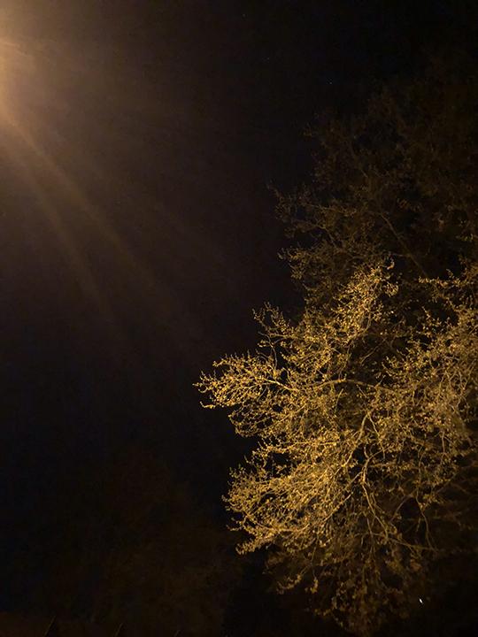 night_tree_web.jpg
