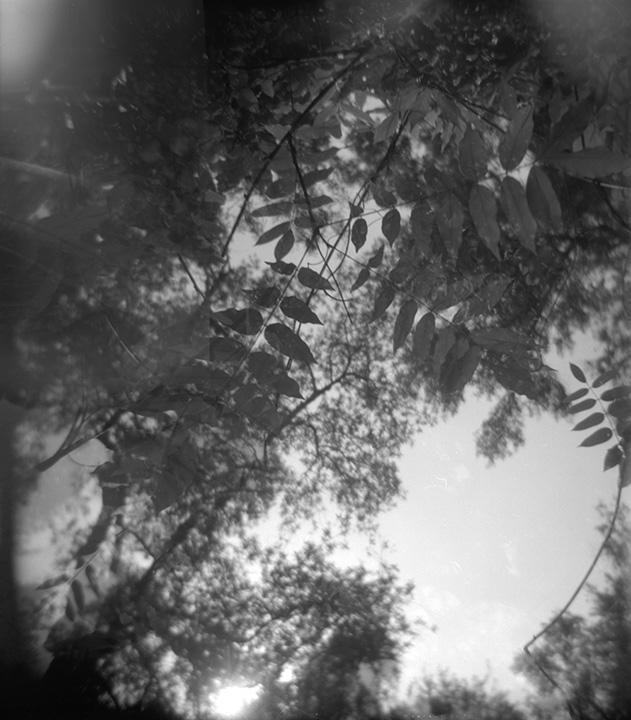 through_the_trees_web.jpg